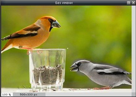 Инструмент Насыщенность в Pixlr Editor